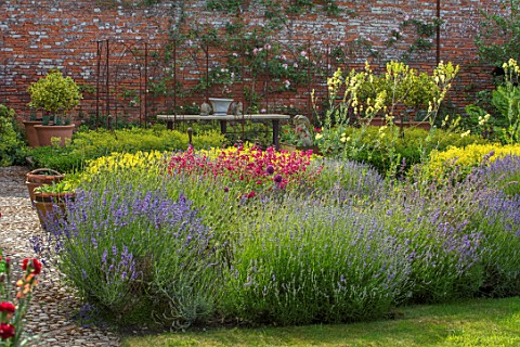 THE_WALLED_GARDEN_AT_COWDRAY_WEST_SUSSEX_ENGLISH_COUNTRY_GARDEN_BORDER_WITH_PENSTEMON_LAVENDER_PEREN