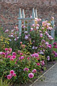 WYNYARD HALL, COUNTY DURHAM: WALLED ROSE GARDEN. WOODEN TRELLIS, ROSES, BORDERS, GRAVEL, PATHS, SUMMER, JUNE. ROSA MORTIMER SACKLER, ROSA PRINCESS ANNE