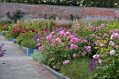 WYNYARD HALL, COUNTY DURHAM: WALLED ROSE GARDEN. BORDERS, SUMMER, JUNE, ROSES, GRAVEL, PATHS