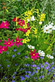 MORTON HALL, WORCESTERSHIRE: PLANT COMBINATION, ASSOCIATION: NICOTIANA ELATA LIME GREEN, COSMOS SONATA CARMINE AND WHITE, ECHIUM VULGARE BLUE BEDDER
