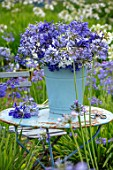 BROADLEIGH GARDENS SOMERSET: BLUE TABLE, BUCKET, CONTAINER WITH AGAPANTHUS, FIELD OF AGAPANTHUS. FLOWERS, FLOWERING, STILL, LIFE,BLUE, WHITE