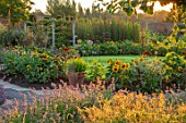 HAMPTON COURT CASTLE, HEREFORDSHIRE: THE KITCHEN GARDEN: LAWN, SUNFLOWERS, LAVENDER, MORNING LIGHT, JULY, SUMMER