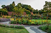 HAMPTON COURT CASTLE, HEREFORDSHIRE: THE KITCHEN GARDEN: LAWN, SUNFLOWERS, LAVENDER, MORNING LIGHT, JULY, SUMMER, PATHS