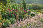 HAMPTON COURT CASTLE, HEREFORDSHIRE: THE KITCHEN GARDEN: BORDER WITH PINK DAHLIAS, LAVENDER, JULY, SUMMER, PATHS