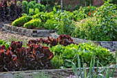 HAMPTON COURT CASTLE, HEREFORDSHIRE: THE KITCHEN GARDEN - RAISED WOODEN BEDS WITH LETTUCES - LETTUCE RED SALAD BOWL AND LEEKS MUSSELBURGH. VEGETABLES, SALADS, POTAGER