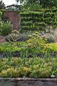 HAMPTON COURT CASTLE, HEREFORDSHIRE: THE KITCHEN GARDEN - RAISED WOODEN BEDS WITH ARTICHOKES AND ONION SUPERSWEET. VEGETABLES, SALADS, POTAGER