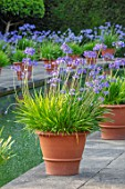 HAMPTON COURT CASTLE, HEREFORDSHIRE: THE DUTCH GARDEN - TERRACOTTA CONTAINER OF BLUE AGAPANTHUS BESIDE CANAL, POND, POOL, WATER, SUMMER, BULBS, JULY