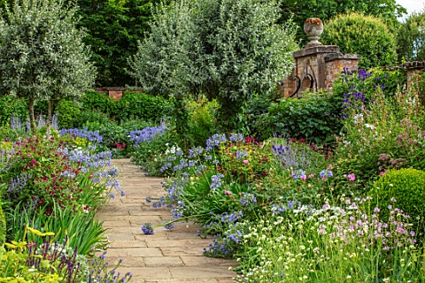 MORTON_HALL_WORCESTERSHIRE_SOUTH_GARDEN_SUMMER_BORDER_ECHIUM_VULGARE_BLUE_BEDDER_WHITE_BEDDER_NICOTI