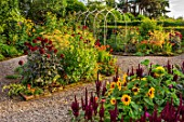 MORTON HALL GARDENS, WORCESTERSHIRE: KITCHEN GARDEN, JULY, SUMMER. DARK RED DAHLIAS  CHAT NOIR  AND KARMA CHOC. SUNFLOWERS, AMARANTHUS PYGMY TORCH, FOENICULUM GIANT BRONZE
