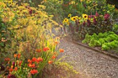 MORTON HALL GARDENS, WORCESTERSHIRE: KITCHEN GARDEN, CROCOSMIA OKOVANGO, HELIANTHUS DWARF YELLOW SPRAY, AMARANTHUS PYGMY TORCH, FOENICULUM VULGARE GIANT BRONZE, JULY