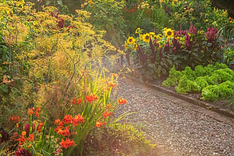 MORTON_HALL_GARDENS_WORCESTERSHIRE_KITCHEN_GARDEN_CROCOSMIA_OKOVANGO_HELIANTHUS_DWARF_YELLOW_SPRAY_A