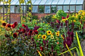 MORTON HALL GARDENS, WORCESTERSHIRE: KITCHEN GARDEN, FOENICULUM VULGARE GIANT BRONZE, DAHLIA KARMA CHOC, SUNFLOWERS, AMARANTHUS PYGMY TORCH, JULY, BORDERS, KITCHEN