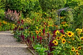 MORTON HALL GARDENS, WORCESTERSHIRE: KITCHEN GARDEN, BORDER WITH SUNFLOWERS, AMARANTHUS PYGMY TORCH, JULY, BORDERS, KITCHEN, PATHS