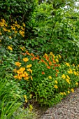 MORTON HALL GARDENS, WORCESTERSHIRE: KITCHEN GARDEN, BORDER WITH HELENIUM MOERHEIM BEAUTY, LILIUM LEICHTLINII, INULA HOOKERI, PATHS, JULY, SUMMER, YELLOW, FLOWERING