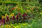 MORTON HALL GARDENS, WORCESTERSHIRE: KITCHEN GARDEN, BORDERS WITH SUNFLOWERS, AMARANTHUS PYGMY TORCH, JULY, BORDERS, KITCHEN, PATHS