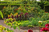 MORTON HALL GARDENS, WORCESTERSHIRE: KITCHEN GARDEN, BORDERS WITH SUNFLOWERS, AMARANTHUS PYGMY TORCH, JULY, BORDERS, KITCHEN, PATHS, VEGETABLES