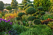 MEADOW FARM GARDEN AND NURSERY, WORCESTERSHIRE: CLOUD PRUNED, CLIPPED BOX, BUXUS, PHLOX ADESSA PURPLE STAR. BORDERS, GREEN, TOPIARY