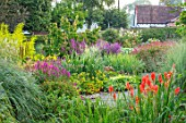 MEADOW FARM GARDEN AND NURSERY, WORCESTERSHIRE: BORDERS - KNIPHOFIA ROBS RED, LYTHRUM SALICARIA, PERSICARIA FIRETAIL, SALIX GOLDEN SUNSHINE
