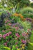 MEADOW FARM GARDEN AND NURSERY, WORCESTERSHIRE: LAWN, BORDER WITH CROCOSMIA OKOVANGO, DAHLIA MEGENTA STAR, NEPETA KUBANICA, ECHINACEA PURPUREA