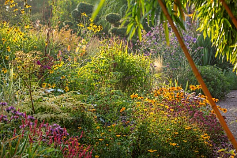 MEADOW_FARM_GARDEN_AND_NURSERY_WORCESTERSHIRE_PATH_BORDERS_PHYLLOSTACHYS_AUREOCAULIS_PERSICARIA_EAST