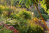 MEADOW FARM GARDEN AND NURSERY, WORCESTERSHIRE: PATH, BORDERS, PHYLLOSTACHYS AUREOCAULIS, PERSICARIA EASTFIELD, MONARDA VIOLET QUEEN, RUDBECKIA LACINIATA