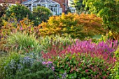 MEADOW FARM GARDEN AND NURSERY, WORCESTERSHIRE: BORDER PERSICARIA FIRETAIL, LYTHRUM SALACARIA, ACER PALMATUM SEIRYU, ERYNGIUM PLANUM, SOLIDAGO TOM THUMB