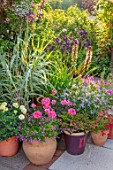 MEADOW FARM GARDEN AND NURSERY, WORCESTERSHIRE: PATIO, CONTAINERS - TAGETES VANILLA, ARUNDO DONAX VARIEGATA, EUCOMIS OAKHURST, POTS, TERRACE
