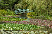 BENNETTS WATER GARDENS, DORSET: LAKE, WATER LILIES, WATERLILIES, BLUE, PAINTED, MONET STYLE, BRIDGE, SUMMER, ENGLISH, COUNTRY, GARDEN, POND, POOL, PINK, FLOWERING, WILLOWS
