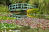 BENNETTS WATER GARDENS, DORSET: LAKE, WATER LILIES, WATERLILIES, BLUE, PAINTED, MONET STYLE, BRIDGE, SUMMER, ENGLISH, POND, POOL, PINK, FLOWERING, WILLOWS, REFLECTIONS, REFLECTED