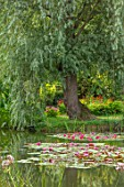 BENNETTS WATER GARDENS, DORSET: LAKE, WILLOWS, WATER LILIES, WATERLILIES, POND, POOL, PINK, FLOWERING, REFLECTIONS, REFLECTED