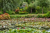 BENNETTS WATER GARDENS, DORSET: LAKE, WILLOWS, WATER LILIES, WATERLILIES, POND, POOL, PINK, FLOWERING, REFLECTIONS, REFLECTED, GAZEBO, SUMMERHOUSE
