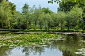BENNETTS WATER GARDENS, DORSET: LAKE, WILLOWS, JETTY, WOODEN, WATER LILIES, WATERLILIES, POND, POOL, REFLECTIONS, REFLECTED