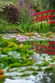 BENNETTS WATER GARDENS, DORSET: LAKE, WATER LILIES, WATERLILIES, POND, POOL, PINK, FLOWERING, SUMMER, RED PAINTED JAPANESE BRIDGE