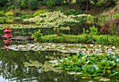 BENNETTS WATER GARDENS, DORSET: LAKE, WATER LILIES, WATERLILIES, POND, POOL, PINK, FLOWERING, SUMMER, RED PAINTED JAPANESE LANTERN, CORNUS CONTROVERSA VARIEGATA