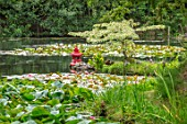 BENNETTS WATER GARDENS, DORSET: LAKE, POND, POOL, SUMMER, RED PAINTED JAPANESE, CHINESE LANTERN, CORNUS CONTROVERSA VARIEGATA, WATERLILIES, WATER LILIES