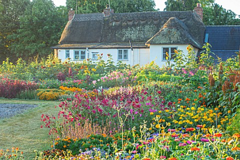 ASTON_POTTERY_OXFORDSHIRE_ANNUAL_BORDERS_WHITE_COTTAGE_NICOTIANAS_SUNFLOWERS_CLEOME_SPINOSA_VIOLET_Q