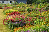 ASTON POTTERY, OXFORDSHIRE: ANNUAL BORDERS, WHITE COTTAGE, NICOTIANAS, SUNFLOWERS, CLEOME SPINOSA VIOLET QUEEN, GARDENS