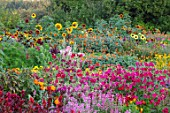 ASTON POTTERY, OXFORDSHIRE: ANNUAL BORDERS, NICOTIANAS, SUNFLOWERS, CLEOME SPINOSA VIOLET QUEEN, TITHONIA ROTUNDIFOLIA, GARDENS