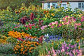 ASTON POTTERY, OXFORDSHIRE: ANNUAL BORDERS, WHITE COTTAGE, SUNFLOWERS, CLEOME SPINOSA, ZINNIAS, AMARANTHUS, GARDENS, SUMMER, ANNUALS