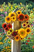 ASTON POTTERY, OXFORDSHIRE: SUNFLOWER WREATH - HELIANTHUS VELVET QUEEN, SUMMER BREEZE, EARTH WALKER, CLARET F1, SUMMER FIRE, MAGIC ROUNDABOUT, RED SUN, SONJA, ARRANGEMENTS, FLOWERS