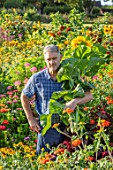 ASTON POTTERY, OXFORDSHIRE: STEPHEN BAUGHAN HOLDING SUNFLOWERS IN THE ANNUAL BORDERS, SUMMER, AUGUST