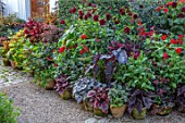 CLAUS DALBY GARDEN, DENMARK: BORDER OF CONTAINERS IN ORANGES AND REDS PLANTED WITH FOLIAGE OF COLEUS, MAPLES, DAHLIAS ARABIAN NIGHT AND RIP CITY, BEGONIA REX, ZINNIAS