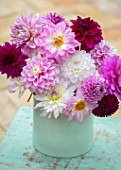 PINK, RED DAHLIAS IN PALE BLUE CONTAINER. FLOWERS, ARRANGEMENTS, CUT, CUTTING, GARDEN, DISPLAYS, ARRANGED