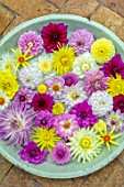 PINK, YELLOW, WHITE DAHLIAS FLOATING IN A BOWL.  CONTAINER. FLOWERS, ARRANGEMENTS, CUT, CUTTING, GARDEN, DISPLAYS, ARRANGED