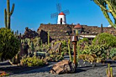 JARDIN DE CACTUS, LANZAROTE, CANARY ISLANDS: DESIGNER CESAR MANRIQUE -  CIRCULAR CACTUS GARDEN WITH WINDMILL. CANARY ISLANDS, DRY, DROUGHT, TOLERANT, ROCKS, STONES, CACTI