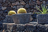 JARDIN DE CACTUS, LANZAROTE, CANARY ISLANDS: DESIGNER CESAR MANRIQUE - LAVA CONTAINERS, BOWLS, PLANTED WITH CACTUS, CACTI, ON TERRACE