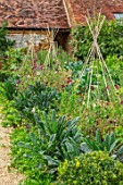 WARDINGTON MANOR, OXFORDSHIRE: THE WALLED POTAGER, KITCHEN GARDEN - BORDERS WITH KALE AND SWEET PEAS ON TRIPODS. LATE, SUMMER, ANNUALS, WALLS, ENGLISH, COUNTRY, GARDEN