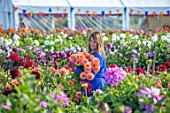 AYLETTS NURSERIES, HERTFORDSHIRE: SUE HENNESSY HOLDING CUT FLOWERS OF DAHLIA SHANDY