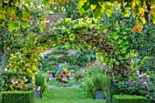 PASHLEY MANOR GARDEN, SUSSEX: ARCH OF VITIS, ENTRANCE TO KITCHEN GARDEN IN SEPTEMBER. VEGETABLE, POTAGER