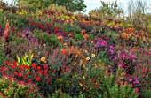 ASTON POTTERY, OXFORDSHIRE: HILLSIDE, SEPTEMBER - DAHLIAS, CANNAS. AGASTACHE, SALVIAS, PERENNIALS, HOT COLOURS, YELLOW, RED, ORANGE FLOWERING, FLOWERS, HELIANTHUS LEMON QUEEN